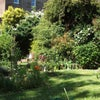 Double room in large garden flat in Redland Main Photo